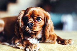 Pet Cleaning Tips